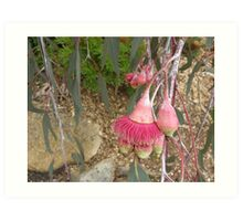 cropped photo -moved main focus to off centre - eucalypt blossom Art Print