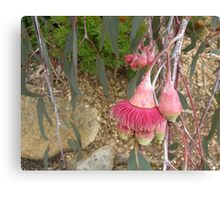 cropped photo -moved main focus to off centre - eucalypt blossom Canvas Print