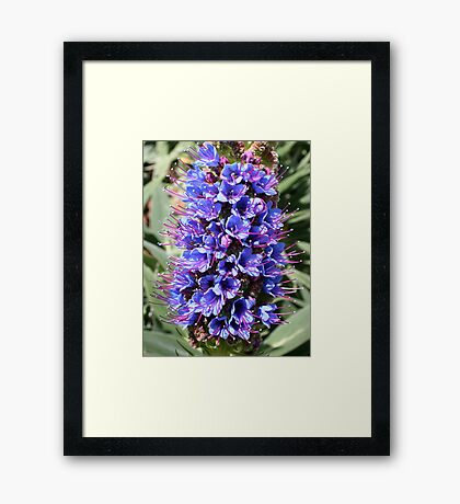 Blue Miniatures Framed Print
