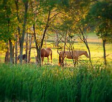 Sweet Pasture Paradise by Tate6