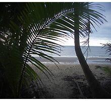 Wonga Beach, North Queensland Photographic Print