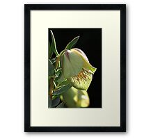 Glow Of The Bell Framed Print