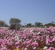 Wildflowers by Robert Bradley