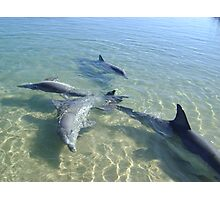 Dolphins at play Photographic Print