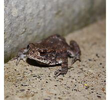 Tinny Toad Photographic Print