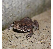 Tinny Toad Photographic Print
