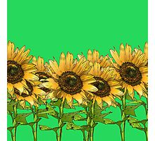 Sunflowers Green Photographic Print