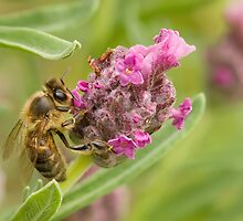 A Busy Bee by Vickie Burt