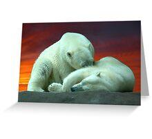 Polar Beauty Greeting Card