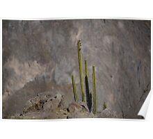 Colca Cacti Poster