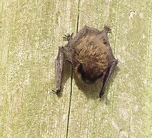 BAT by brucemlong