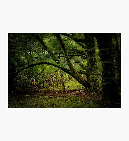 In The Forest Photographic Print