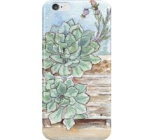 Echeveria imbricata painting 1 iPhone Case/Skin