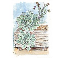 Echeveria imbricata painting 1 Photographic Print
