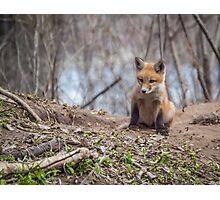 Kit Fox 2011-1 Photographic Print