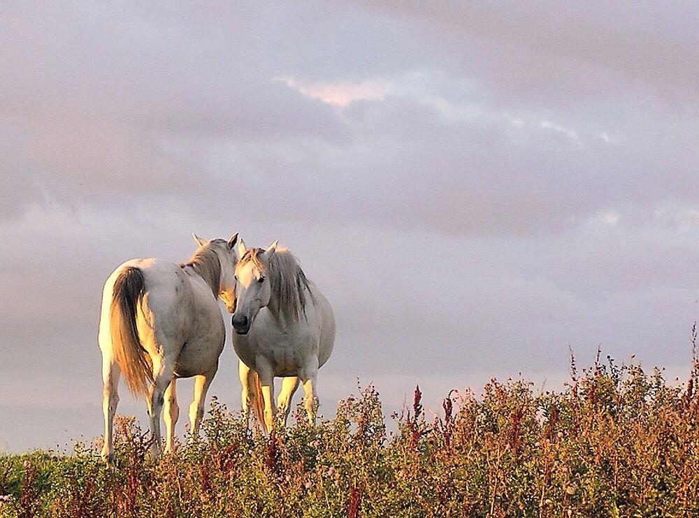 Horse Whisperer by beyondthepale