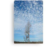 Cypress Under a Popcorn Sky Metal Print