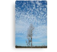 Cypress Under a Popcorn Sky Canvas Print