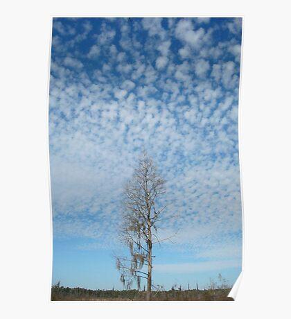 Cypress Under a Popcorn Sky Poster
