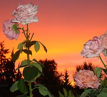 FLOWERS AS BEAUTIFUL AS THE SUNSET  by MsLiz