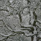 Snow Branches by JessicaLuce
