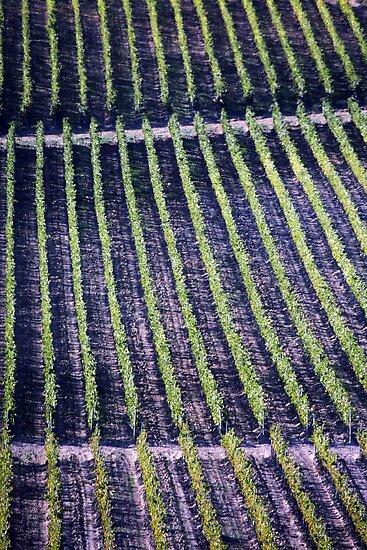 Vineyards Vineyards by phil decocco
