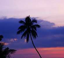 Against A Tropical Sky by florene welebny