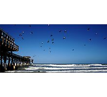 Pigeons At The Beach Photographic Print