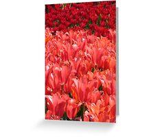 Rainbow of Tulips 2 Greeting Card