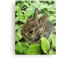 Sweet Baby Rabbit Metal Print