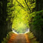 Lime Tree Avenue by Martins Blumbergs