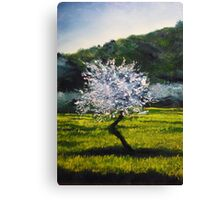 ALMOND TREE IN BLOSSOM - very much inspired by impressionist masters... Van Gogh, Monet, Pissaro, Renoir...  Canvas Print