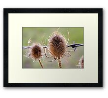 Thistle and Wire Framed Print