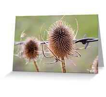 Thistle and Wire Greeting Card