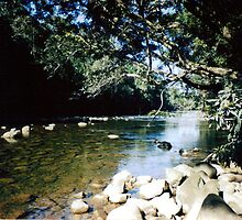 Daintree River, Cape Tribulation. by Honor Kyne