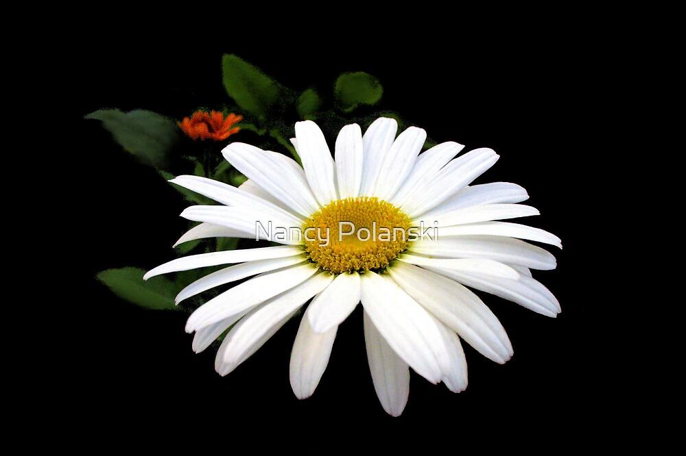 Daisy Love by Nancy Polanski