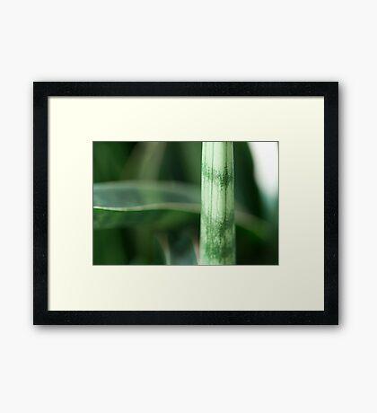 Stalk Framed Print