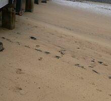 pier footsteps by aylah01