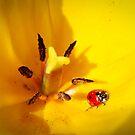 Ladybug by Jason Weigner