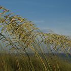 Sea Oats by Judy Clark