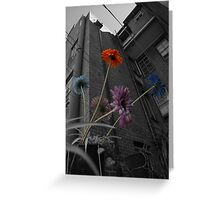 Coloured Flowers Greeting Card