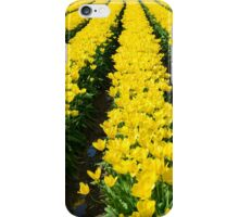 Rows of Beauty iPhone Case/Skin