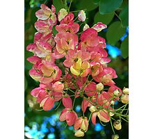 Rainbow Shower Tree Blossoms Photographic Print