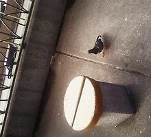 Pigeon by geegee