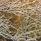 Window to Winter by mikegood