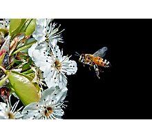 Pollenator Photographic Print