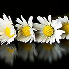 Daisy chain by mausue