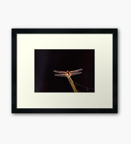 Dragon Fly. Framed Print