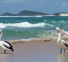 A Pelican's Paradise by Cherie Carlson