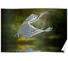 Everglades Egret Poster